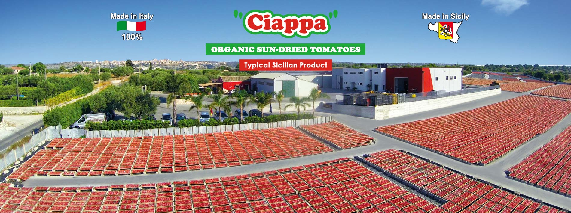 sun drying tomato - Ciappa typical sicilian product